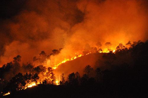 Thảm cảnh cháy rừng