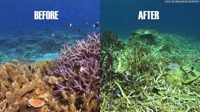 Rạn san hô bị biến dạng