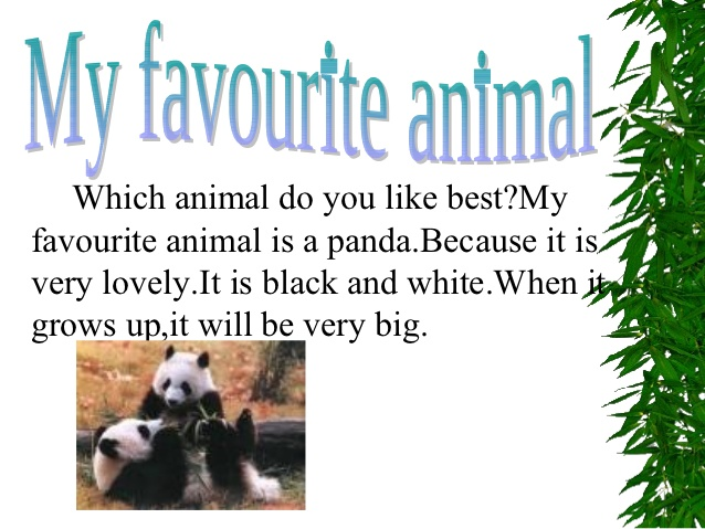 talk about your favorite Animal