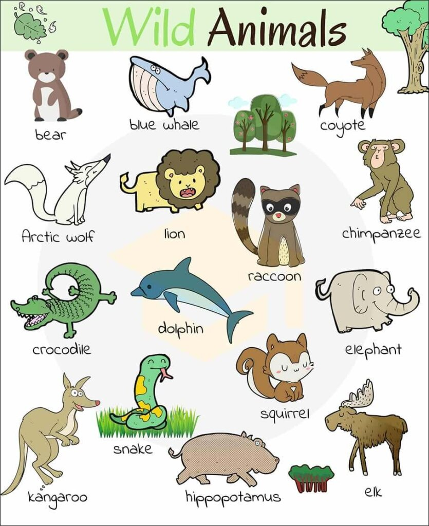 từ vựng tiếng anh về động vật