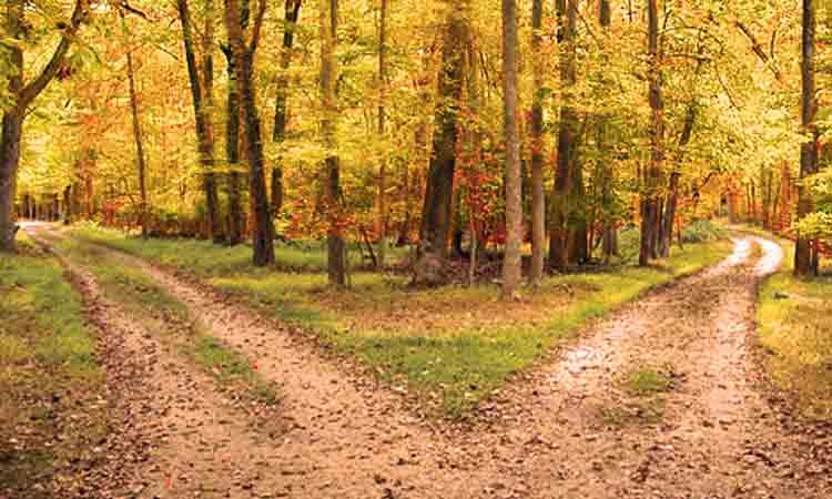Hình ảnh về The road not taken